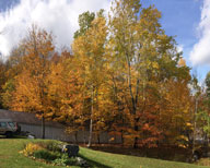 Trees around Carriageway at Birch Ridge Inn still showing color